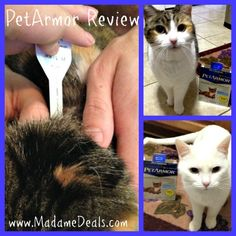 Protect your cats with PetArmor! (Review) #AD #Pets