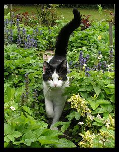 """""""She moved through the garden in glory because she had long claws at the end of her paws."""" --Richard Garnett"""