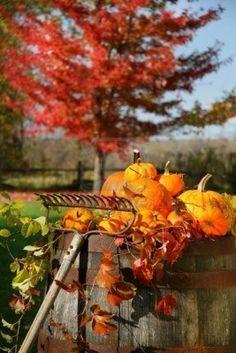 Signs of autumn. #fall #autumn #pumpkins