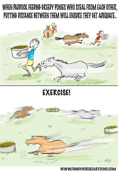 Arguably the best way to exercise a pony