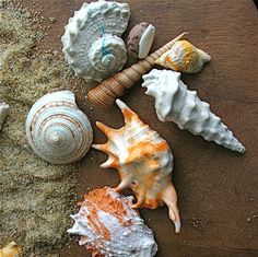 Can you believe that these beautiful seashells are actually handmade chocolates? Click through if you don't believe us!