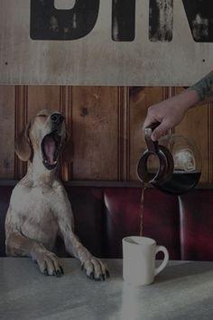 .dog's breakfast..