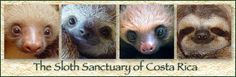 The Sloth Sanctuary of Costa Rica