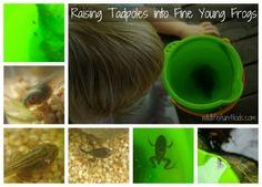 rainbow dash, activities for kids, homeschool zoolog, rainbows, pets, frogs, rais tadpol, scienc, 4 kids