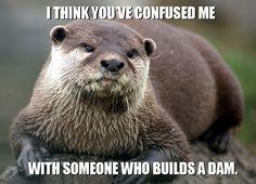 Otter vs Beaver Beavers build dams, Otters don't.........lol