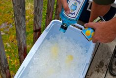 """""""Combine 3 gallons of gin,7 cans of lemonade concentrate, 6 bunches of fresh mint in a large clean ice chest with a 20 lb bag of ice. Stir, stir, stir, taste, taste, taste. Make night before so that some of the ice melts into the drink and flavors marry perfectly. Be careful, gin taste is conspicuously absent, so its easy to forget you are drinking pure blackout juice.""""    REALLY!"""