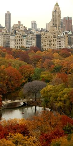 Central Park, New York in the #fall #autumn