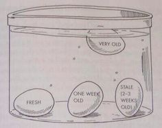 How to tell if an egg if fresh