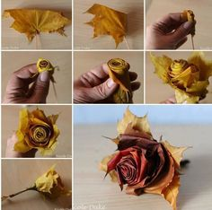 Roses from Autumn leaves!