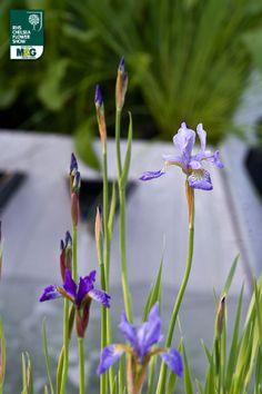 RHS Chelsea Flower Show - Show Garden - RBC Waterscape Garden Royal Bank of Canada Hugo Bugg