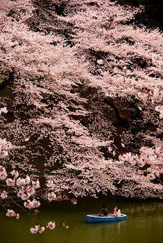 Sakura Mittelloge, Tokyo