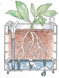 Good container gardening info