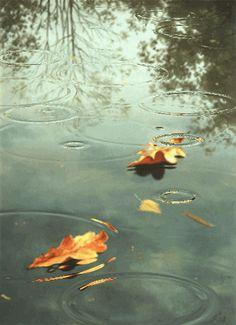 #Raindrops in #Autumn #rain storm - animated autumn #gif drops