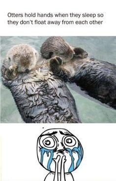 Cute little otters