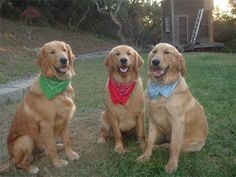 I will have 3 of these one day... with their own collars!