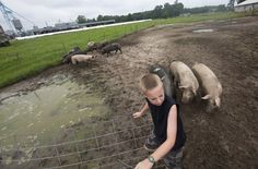 Kaleb Bland, 9, grandson of Pete Edwards, tends to the hogs while helping his family at the Windhaven Farm Market on June 21. (Photo by Kaitlin McKeown/Daily Press)