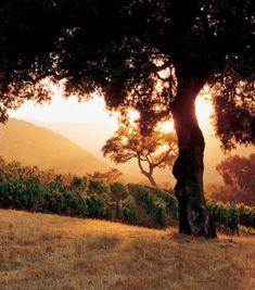 Vineyards.