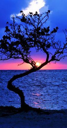 pink sunset ~Belize, Central America