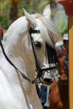 Jerez de la Frontera Horse Festival by jennyfotos via Flickr.com