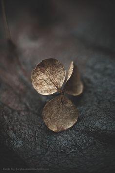 margadirube:  josepha-amarantine:Golden