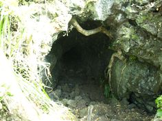 Entrance to the lava caves on Rangitoto island. Take a torch!