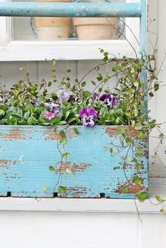 Old blue carrier and pansies