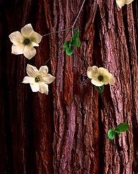 Dogwood by Rodney Lough Jr. You really need to see these prints in person.