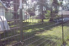 How to build a great escape proof dog fence 20feet by 40 feet for Jesse Dave will build this summer!!!!!!