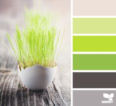 easter sprung, design seed, color palettes, bathroom colors, color schemes, bedroom colors, color seeds, colors green, color 2013
