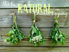 The Basics of Natural Chicken Keeping ~ Fresh Eggs Daily