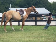 20 Ways To Make Your Horse Hate Your Guts - Fun read.