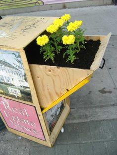 Toronto street artist and guerrilla gardener planted this #garden in an abandoned flyer box! #guerrillagardening