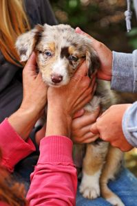 Brown Dog Foundation + Organizations That Help Dog Owners Pay Expensive Vet Bills #dogs