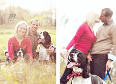 photography with pets, dogs, springer spaniels, engagement session with dogs, posing couples