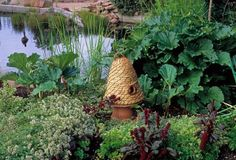 """Growing Rhubarb in an Edible Landscape by Rosalind Creasy """"Rhubarb serves as a backdrop for low-growing herbs in the Denver Botanical Garden. The parsley and blooming oregano provide bright green accents against the red of the flowering amaranth and rhubarb stalks while the straw bee skep adds a rustic decorative touch."""""""