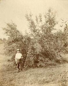 Almanzo in his orchard at Rocky Ridge Farm.