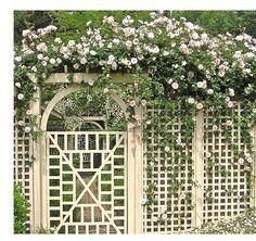 rose arbor and trellis