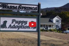 FINALLY A Super Bowl Commercial That Doesn't Make Me Mad. What A Perfect Song, Too! Budweiser had the right idea when they cast their SuperBowl Commercial with their trademark Clydesdale…and a super adorable PUPPY! Please SH...