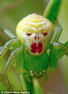 This bright green spider bears a startling resemblance to the clown in Stephen King's 1990 hit film It
