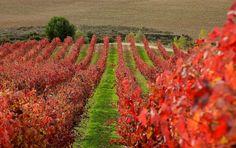 La #Rioja, Spain. #wine #tours