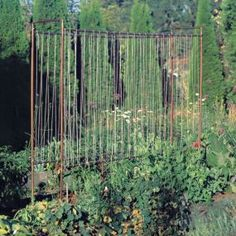 trellis made from co