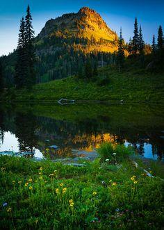 ✯ Sunrise in Mount Rainier National Park near Tipsoo Lake