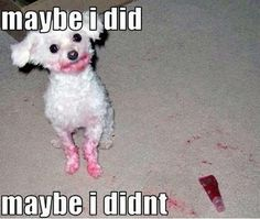 funny animals, funny dogs, funni, lip gloss, red lips