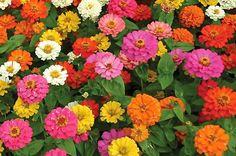 Top 10 Foolproof Plants for Kids  birdsandblooms.com