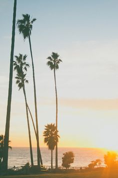 Summer sunset #palmtrees #beachlife #beach