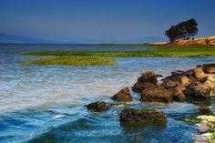 Point Pinole Regional Shoreline.  Built my first house nearby...it is a wonderful place to take the pup.