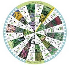 shade gardening, garden wheel