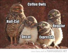 Coffee Owls bird, funni stuff, anim, coffe owl, laugh, coffee, humor, owls, thing