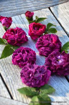 rose garden, crimson rose