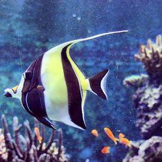 SEA Aquarium  Singapore  Fish